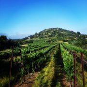 תמונה ראשית סיור יין ובראנץ
